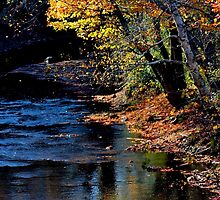 Bright Colours by a Dark Stream by Kathleen Daley