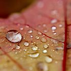 Beautiful Beads of Autumn Rain by Kathleen Daley