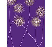 Purple Dandelions Photographic Print