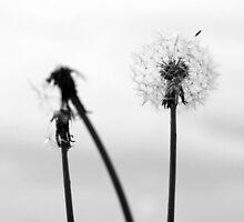 Solitude by buko