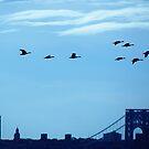 Birds over New York City by Alberto  DeJesus