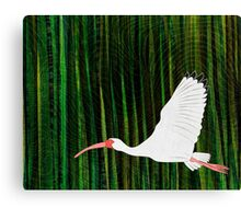 American White Ibis In Flight Canvas Print