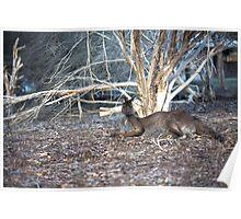 Lazy Old Kangaroo... Poster