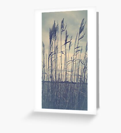 quill Greeting Card
