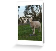 Clever Little Lamb.... Greeting Card