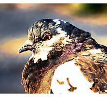 pigeon detail 1 Photographic Print