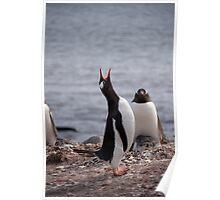 Penguin calling Poster
