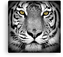 Tiger with yellow eyes Canvas Print