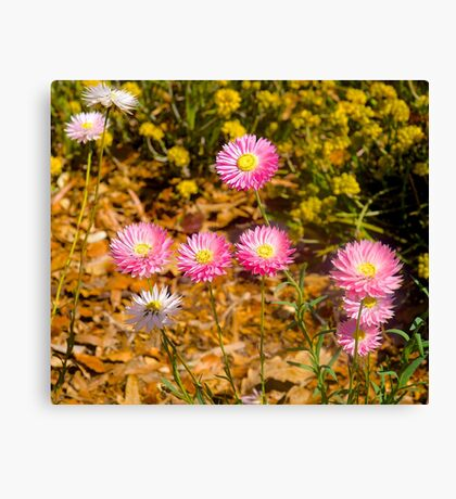 Wildflowers, Kings Park, Perth, Western Australia.. Canvas Print