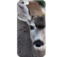 Mule Deer Doe iPhone Case/Skin