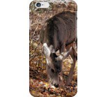 Mule Deer Doe 2 iPhone Case/Skin