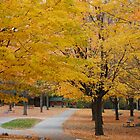 Nature - Fall Colors - 2 by Debbie Mueller