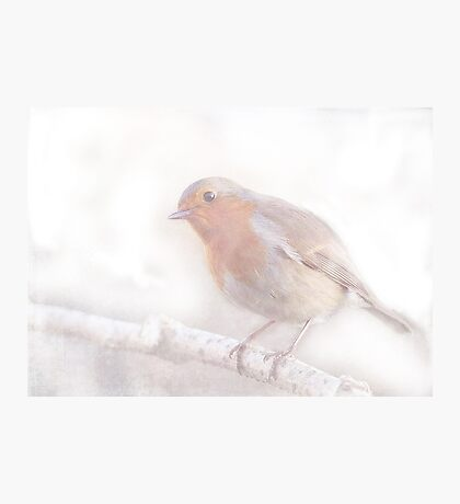 Stay, little cheerful Robin! Photographic Print