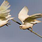 Parrot Flight  by byronbackyard