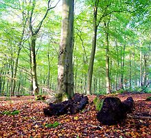Autumn in Friston Forest by mikebov
