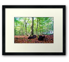 Autumn in Friston Forest Framed Print