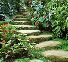 Tropical steps by Arie Koene