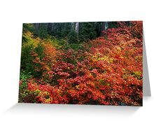 On The Other Side Of The Hill ~ Fall Colors ~ Greeting Card