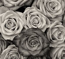 Shaded roses  by franceslewis