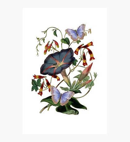 Butterflies on the Vine Photographic Print