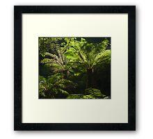 Tree Ferns Framed Print