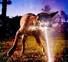 Riot at the dog park by Alex Preiss