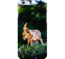 A Pepper in the Grass iPhone Case/Skin