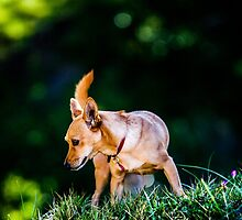 A Pepper in the Grass by Mark  Johnson