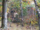 Remnants by Susan S. Kline