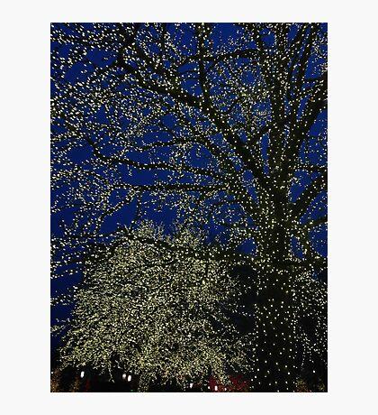 Light trees Photographic Print