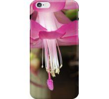 Pink Zygo Cactus iPhone Case/Skin