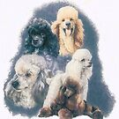 Poodle w/Ghost Image by BarbBarcikKeith