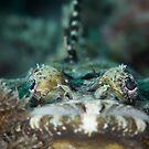 Crocodile's Stiff Upper Lip by James Deverich