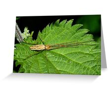 Long-jawed Spider Greeting Card