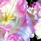 Parrot Tulip by Deborah Crew-Johnson
