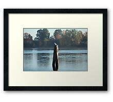 lonely seagulls in the pile Framed Print
