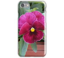Pink Pansy iPhone Case/Skin