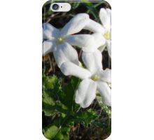 Freshly Bloomed Bull Nettle iPhone Case/Skin