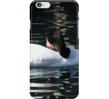 Black Necked Swan Photo iPhone Case/Skin