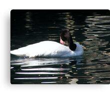 Black Necked Swan Photo Canvas Print