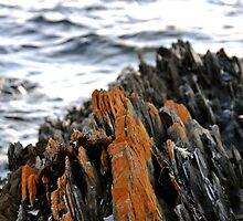 Rocky Cape by STEPHANIE STENGEL | STELONATURE PHOTOGRAPHY