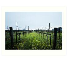 Lush Vineyards Art Print