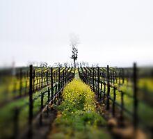 Winter Vineyards by randymir
