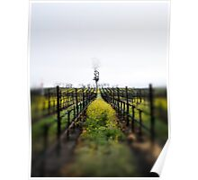 Winter Vineyards Poster