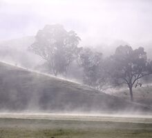 Morning Mist by STEPHANIE STENGEL | STELONATURE PHOTOGRAHY