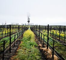 Winter Vines by randymir