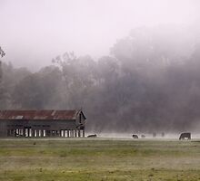 Morning Mist by Stephanie Stengel | stelonature photography