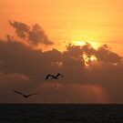 Sunrise with pelicans by zumi