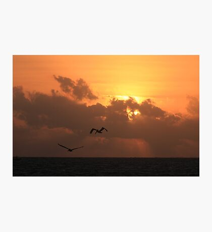 Sunrise with pelicans Photographic Print