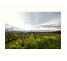 Napa Valley Vineyards Art Print